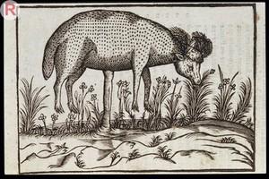 view C. Duret, Histoire admirable des plantes et