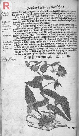 view H. Bock, Kreuterbüch. Darinn Underscheidt, N