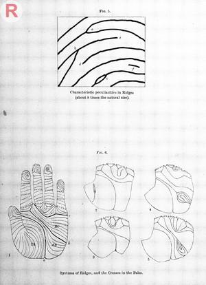 view Francis Galton, Finger prints, 1892