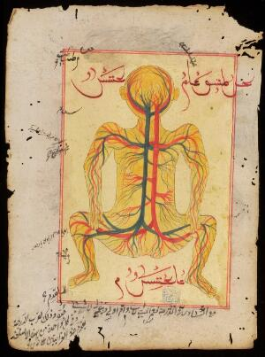 view Anatomical diagram depicting the veins and artery's of the body. Ottoman Empire.