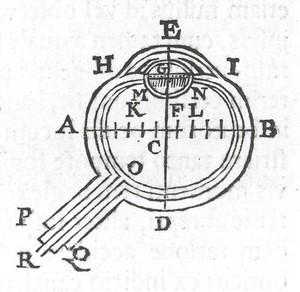 view Diagram of an eye