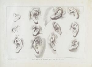 view Drawings of Ears in Ciprianii's 'Rudiments of Drawing..