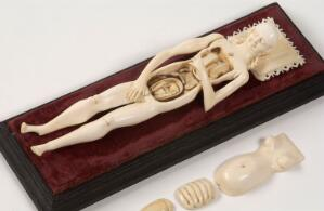 view Ivory anatomical model of a a pregnant female