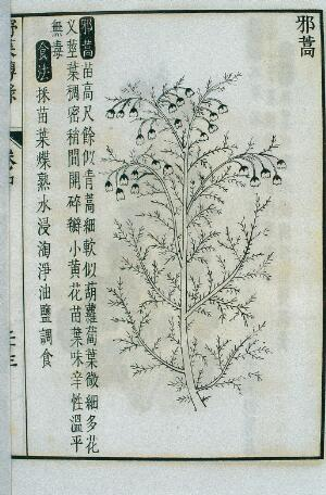 view Xiehao, an edible wild plant, Chinese woodcut