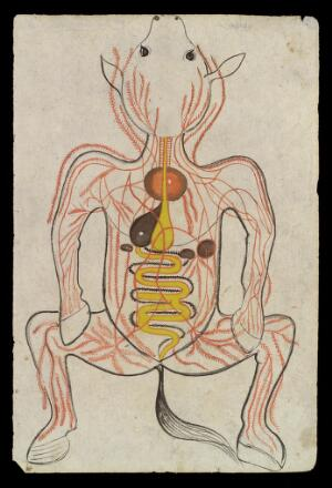 view Intestinal system of a Horse