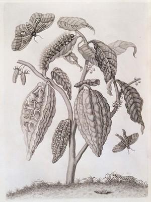 view Plants and wildlife, Surinam, South America, 1726