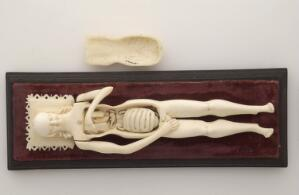 view Ivory anatomical model of a pregnant female with removable parts possibly used by obstetric specialists or midwives to provide reassurance for pregnant women. Possibly German