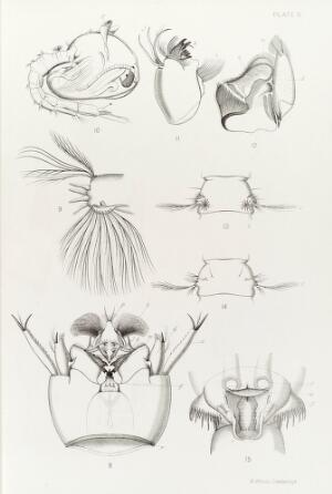 view Life cycle & anatomy of Anopheles mosquito, 1901