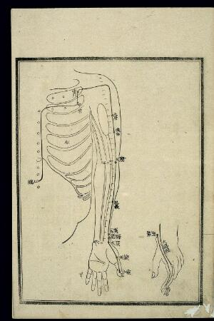 view Acu-moxa chart: Lung channel of hand taiyin, Japanese woodcut