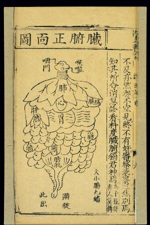 view Distribution of internal organs, front view, Chinese woodcut