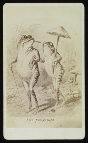 view A male and female frog promenading. Photograph by J.P. Soule, ca. 1876, after a drawing.