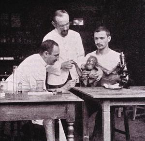 view Halberstaedter and Prowazek with an orang-utan