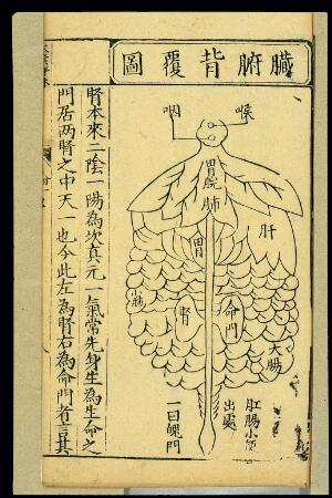 view Distribution of internal organs, back view, Chinese woodcut