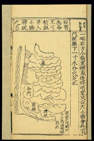 view Position of 'Portal of Life' (right kidney), Chinese woodcut