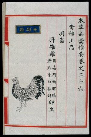 view Chinese Materia Medica illustration, Ming: Red cockerel