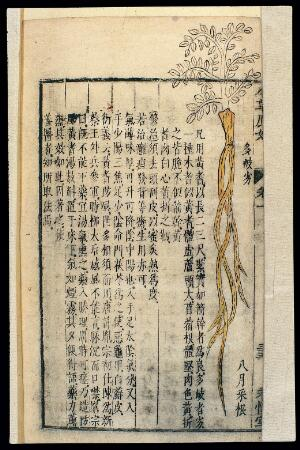 view Chinese Materia medica, C17: Plant drugs, Cattail polle