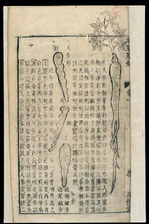view Chinese Materia medica, C17: Plant drugs, Ginseng