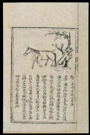 view Ming herbal (painting): Horse
