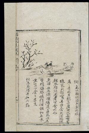 view Ming herbal (painting): The dog