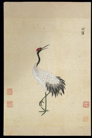 view Ming herbal (painting): Siberian white crane