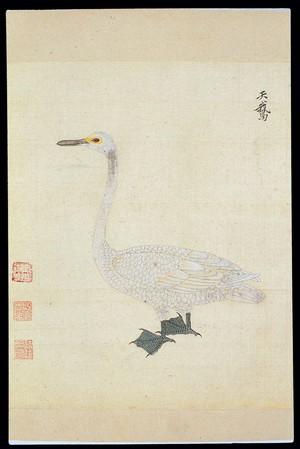 view Ming herbal (painting): Swan