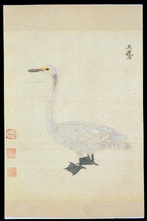 view Ming herbal (painting): Swan