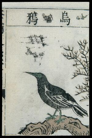view Ming herbal (painting): Crow