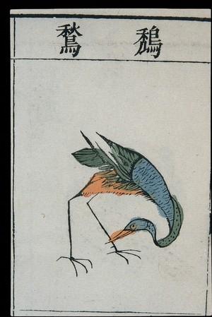 view Ming herbal (painting): Adjutant bird(?)