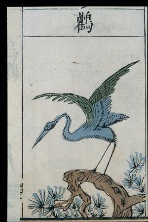 view Ming herbal (painting): Stork