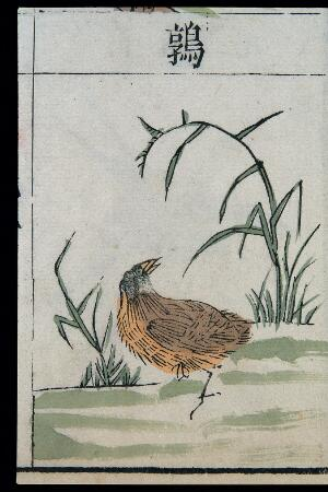 view Ming herbal (painting): Quail