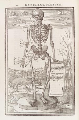 view Human skeleton highlighting the bones of the right arm, hip and leg