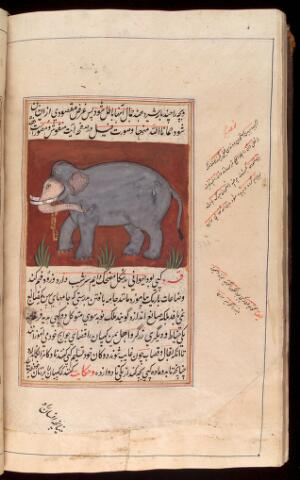 view An Indian Elephant taken from a Persian manuscript on the natural sciences in Nasta'liq script