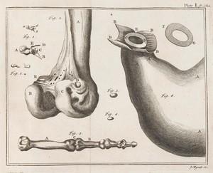view Various depictions of bones.