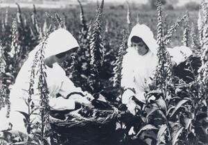 view Girls harvesting foxgloves
