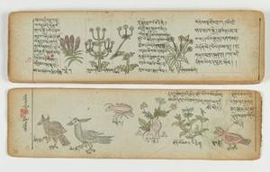 view Tibetan plant manuscript