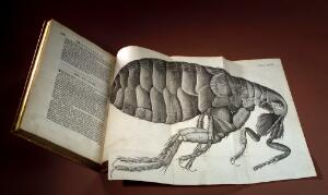 view Robert Hooke, Micrographia, flea