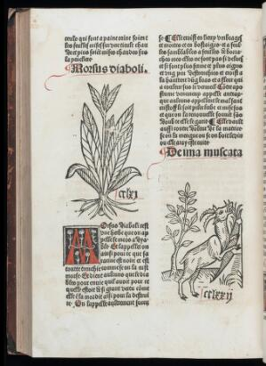 view Page from Arbolayre showing woodcuts of a goat (?) and plant