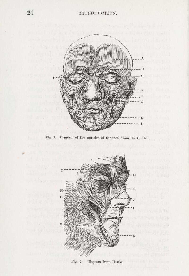 Diagrams Of Muscles Of The Face From Darwins Expressions