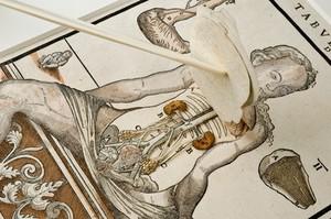 view Anatomical fugitive sheet,female
