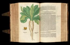 view Mandragora (Mandrake) plant from 'De historia...'