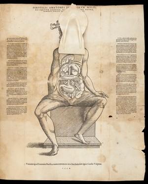 view Anatomical fugitive sheets