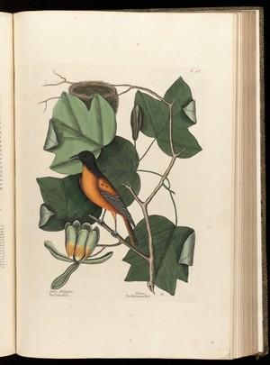 view The natural history of Carolina, Florida...