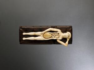 view Ivory anatomical figure, Europe, 1601-1800
