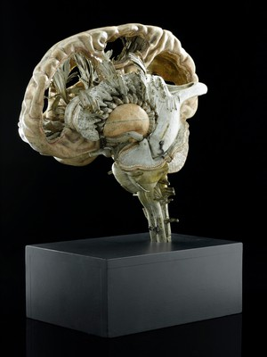 view Model of a human brain, France, 1801-1850