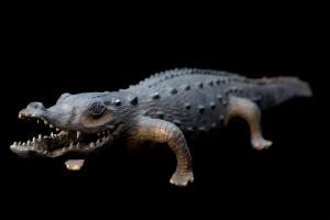 view Model alligator, England, 1801-1900