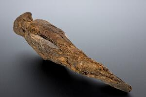 view Mummy of a peregrine falcon, Egypt, 2000-1001 BCE