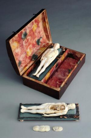 view Two ivory anatomical figures, female and male, in original case. Grey background.