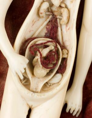 view Female ivory anatomical figure, Europe, undated