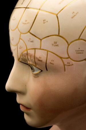 view Porcelain phrenological bust, tinted skin colour, divisions labels and numbers marked in gilt, possible Derby. Detail of profile, black background.