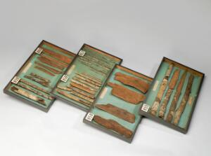 view Display case of specimens of cinchona micrantha bark, Englan
